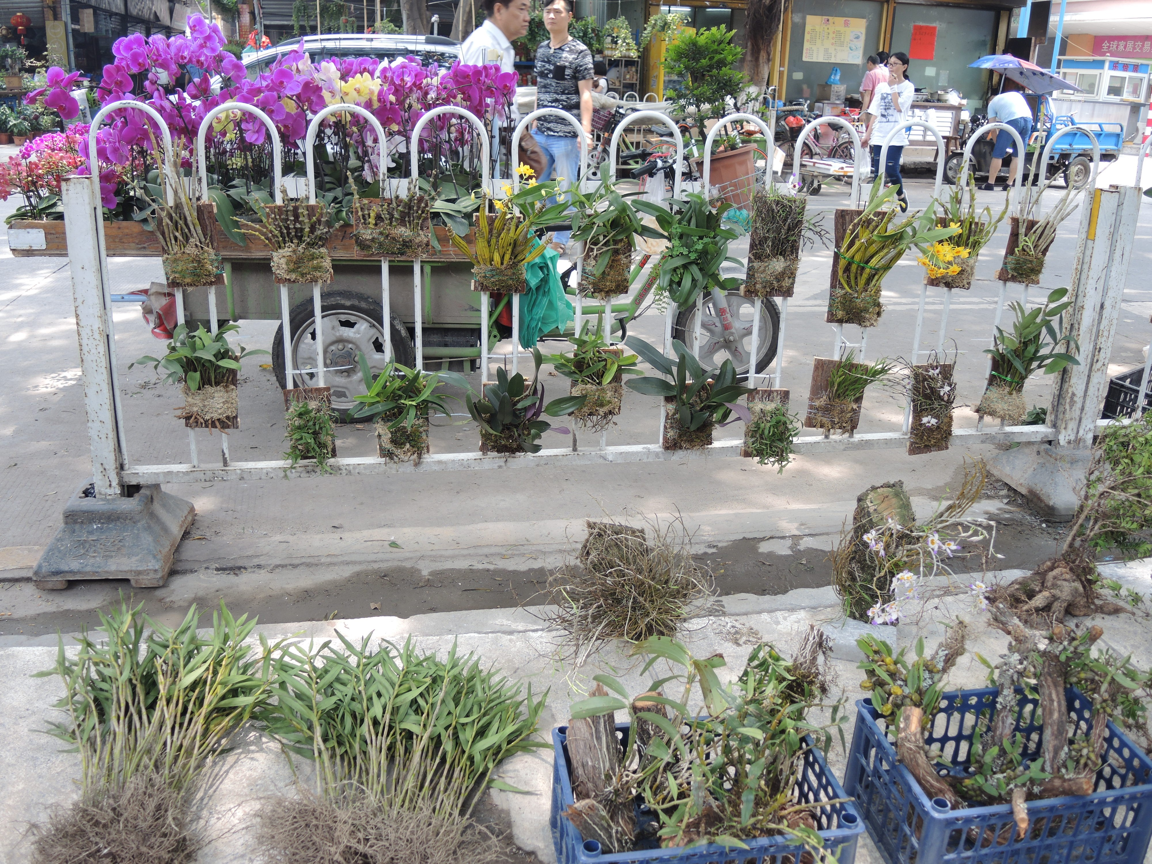 A variety of wild and cultivated orchids for sale. Most orchids are CITES listed on CITES Appendix II, and are important products in the domestic and international wildlife trade.