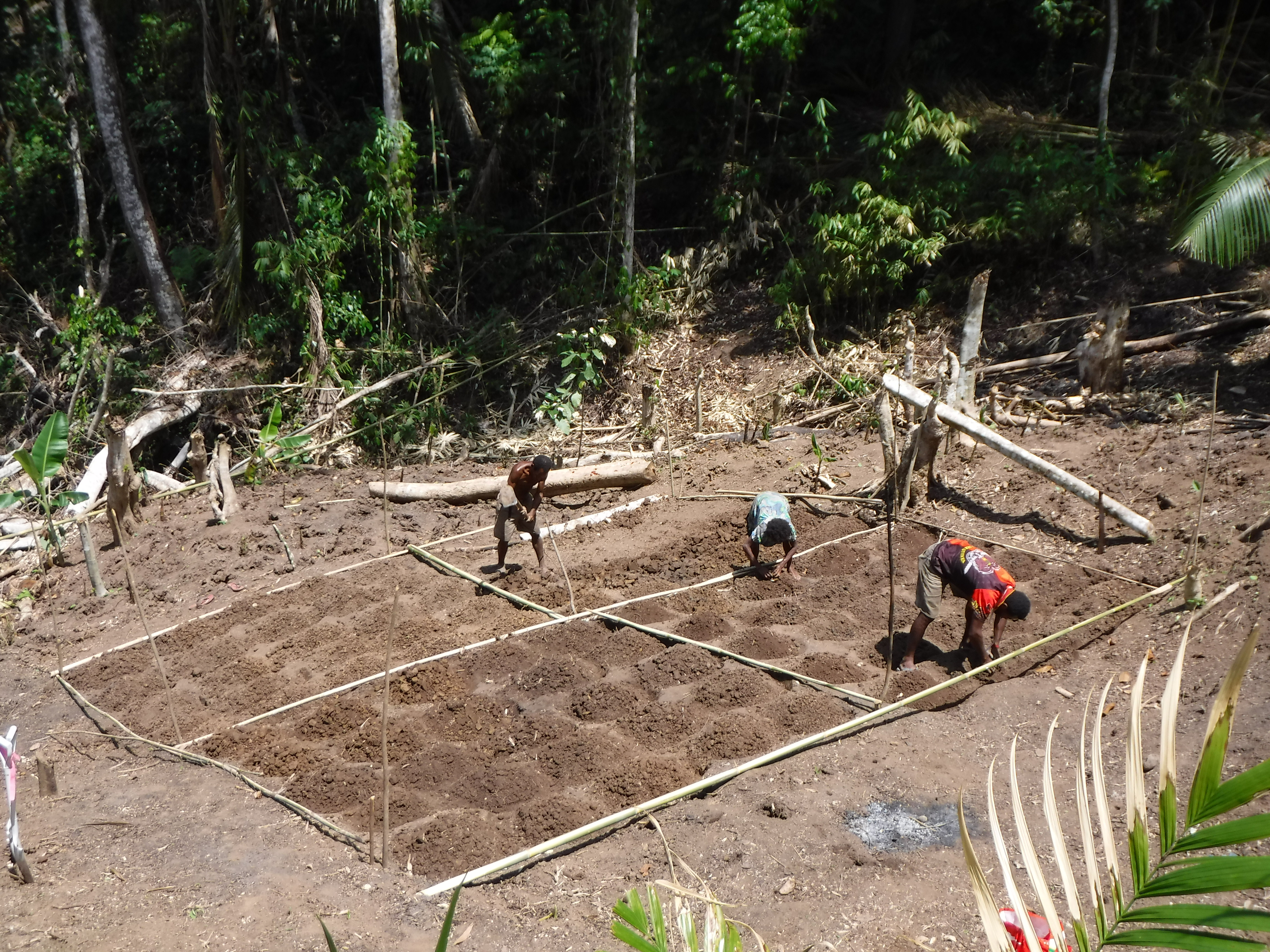 Experimental gardens in Papua New Guinea