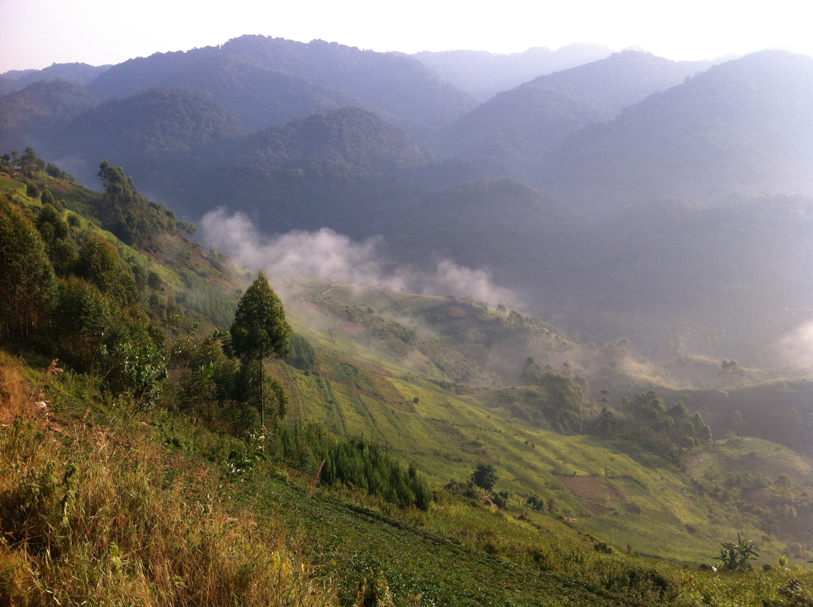 The edge of Bwindi Impenetrable National Park